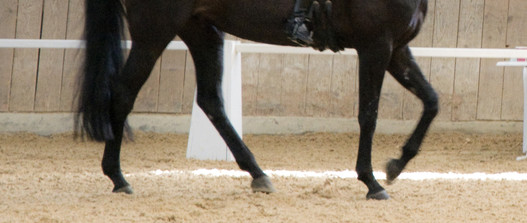 Pferd in der Halle
