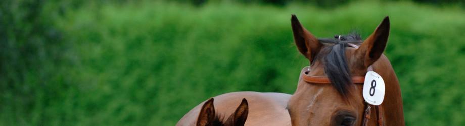 Decken vom lässt frau sich pferd Hilfe ,Hund